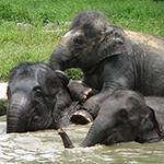 ElephantSanctuary